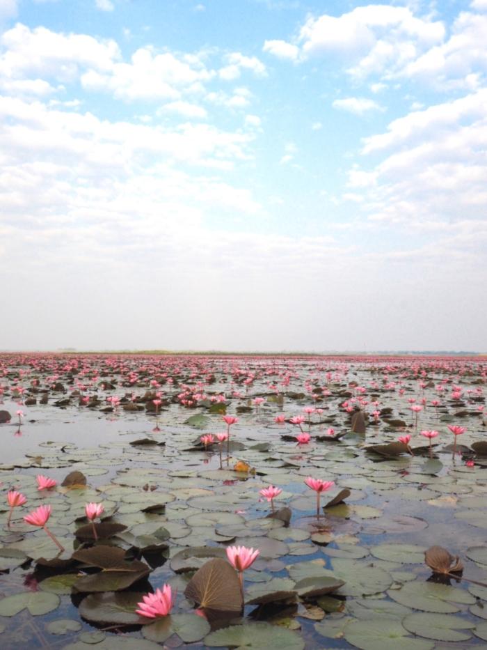 赤い蓮の海 – Talay Bua Dang / タレーブアデーン –