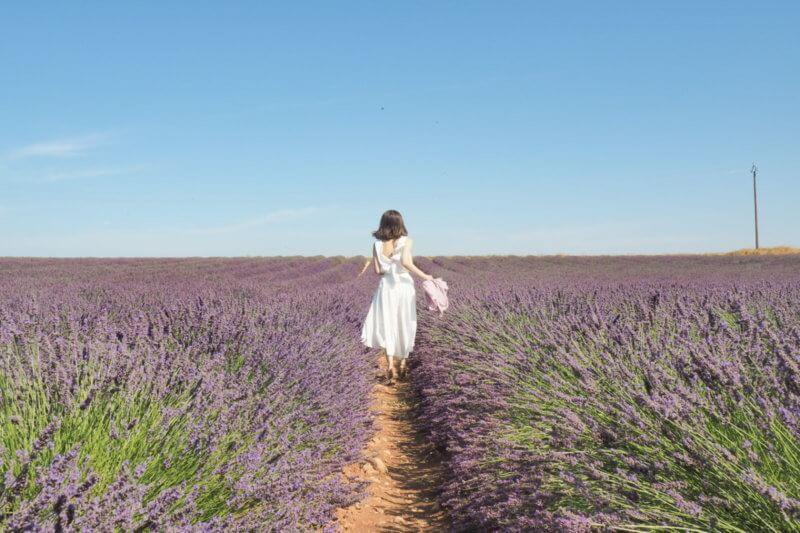 憧れの南フランス、ラベンダー畑。